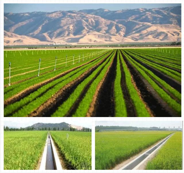 农业自动灌溉系统应用现场